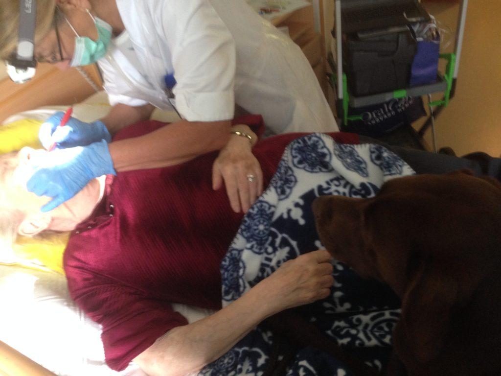 Att få hålla i en varm tass och känna det tunga hundhuvedet vila mot magen gör tandläkarbesöket trevligare.