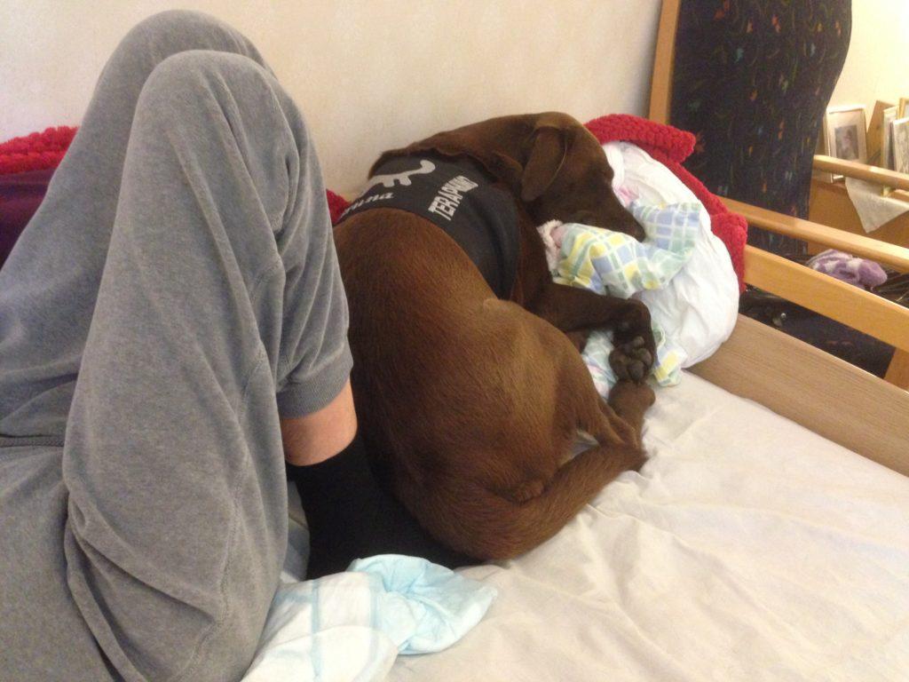 Efter att ha legat en god stund med huvudet på Sagas mage, tyckte Bruna det blev för varmt. Då lade hon sig länst ner i sängen och värmde Sagas fötter i stället.